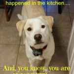dog set the kitchen on fire